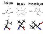 Какие bcaa выбрать – Аминокислоты BCAA — что это и какие выбрать? / Статьи / Украина / Журнал Житомира / сайт города