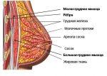 Как накачать девушке грудные мышцы в домашних условиях видео – можно ли увеличить мышцы бюста женщине с помощью упражнений, насколько быстро их можно подкачать и сделать красивыми?