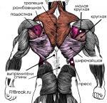 Тренировка упражнения спины – Базовые и вспомогательные упражнения на спину в тренажерном зале
