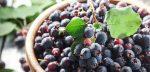 Ирга чем полезна – свойства, противопоказания, рецепты и отзывы
