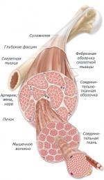 Боль в мышцах на следующий день после тренировки – Почему болят мышцы после тренировки? – Зожник